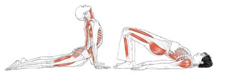Joga w aspekcie ćwiczeń rehabilitacyjnych kręgosłupa